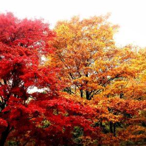 比叡山の紅葉風景